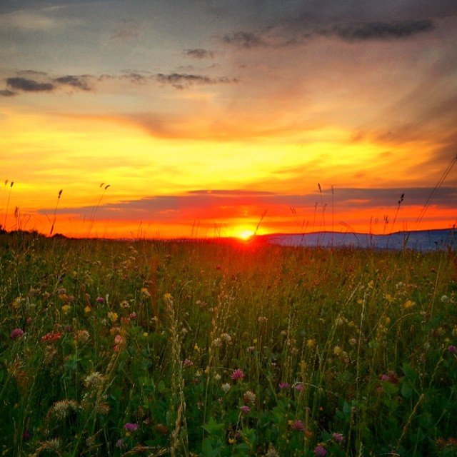 Wildflowers-field-sunset.jpg